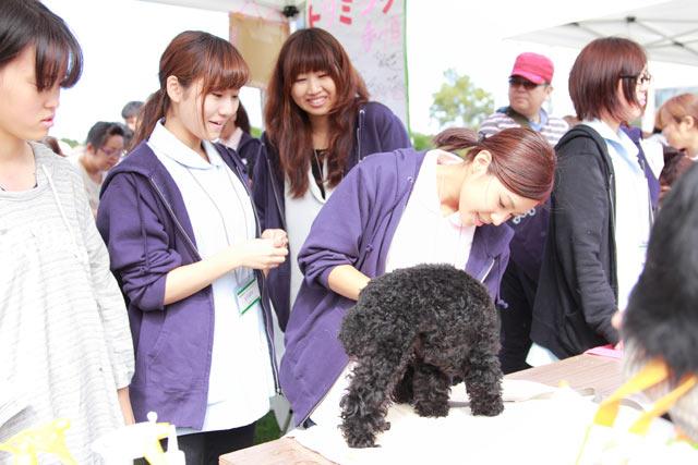 動物愛護フェスティバル撮影